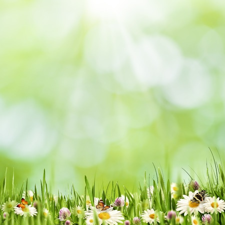 40497714 – abstract natural landscape with beauty daisy flowers and bokeh